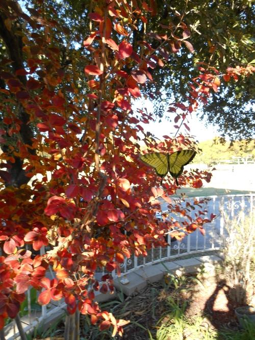 fallbutterfly