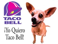 chihuahua-taco-bell-1024x779
