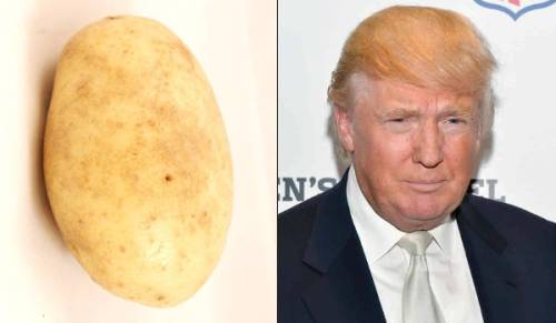 trump-potato