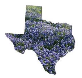 17617977-texas-and-bluebonnets