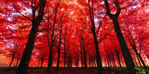 5-fall-leaves-563461075