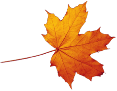 Transparent-Autumn-Leaves-Falling-PNG