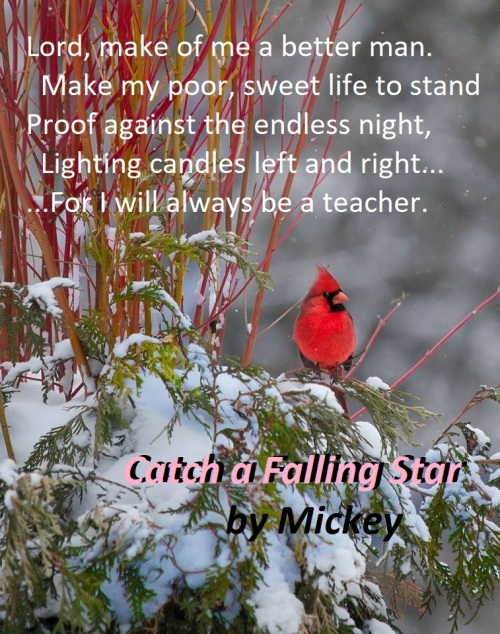 redbird wisdom