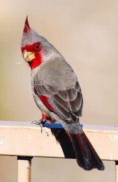 9f253ee075700bbb26e86ba49772ee89--rare-birds-exotic-birds